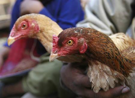 A vendor holds chicken as he waits for customers outside a market in Karachi February 1, 2008. Pakistani authorities have detected an outbreak of H5N1 bird flu in chickens in a part of the northwest where the country recently had its first human death from the virus, a government official said on Saturday. REUTERS/Athar Hussain