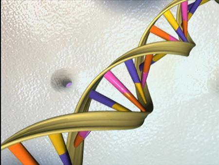 A strand of DNA is seen in an undated illustration. A gene that helps the brain make connections may underlie a significant number of autism cases, researchers in the United States reported on Tuesday. REUTERS/National Institutes of Health/Handout