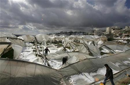Palestinians walk amongst greenhouses damaged by a snowstorm in the West Bank city of Hebron, February 2, 2008. REUTERS/Nayef Hashlamoun