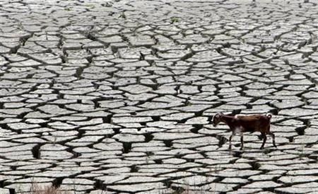 A goat walks along the sun-baked bed of Cyprus's largest reservoir at Kouris, March 20, 2008. Cyprus announced on Monday emergency water cuts to deal with a crippling drought. REUTERS/Stringer