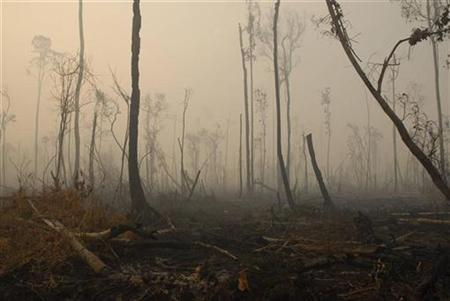 Haze blankets a damaged rainforest in Sampit regency of the Indonesia's central Kalimantan province October 3, 2007. Parts of Asia are losing more than 28,000 square kilometers (10,800 square miles) of forest every year, a trend that must to be reversed immediately to fight climate change, a United Nations report said on Thursday. REUTERS/Hardi Baktiantoro