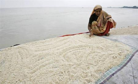 A woman dries rice on the banks of a river in Sirajganj in this July 29, 2007 file photo. Bangladesh is expecting a bumper summer harvest of rice in just a month that will help contain soaring prices due to short supply and an abnormal spike in the export rate by India, government officials said on Sunday. REUTERS/Rafiqur Rahman/Files