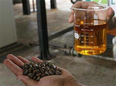 A worker shows a sample of biodiesel made from castor beans (L) at a biodiesel refinery in Iraquara, 310 miles (500 km) west of the Bahia state capital, Salvador March 31, 2008. REUTERS/Jamil Bittar