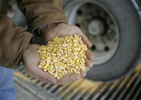 Raw corn is shown as it is unloaded for processing at the Lincolnway Energy plant in the town of Nevada, Iowa December 6, 2007. REUTERS/Jason Reed