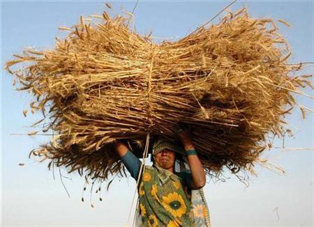 A farmer carries wheat crop as she walks back to her home at Bhadari village, 30 km (19 miles) from the northern Indian city of Allahabad, April 8, 2008. REUTERS/Jitendra Prakash