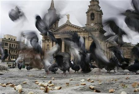 Pigeons feed on pieces of bread thrown by people outside St Publius Church in Floriana, outside Valletta, April 3, 2007. REUTERS/Darrin Zammit Lupi