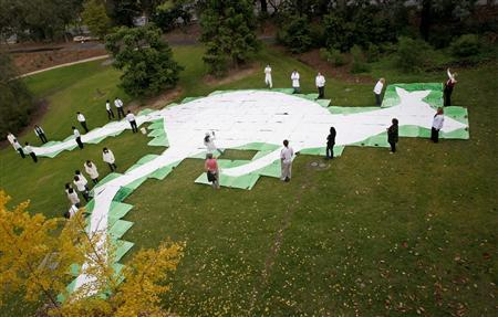 A 32-metre (105 feet) tall kangaroo made of white cardboard is laid out on a paddock at Monash University in Melbourne May 20, 2008. REUTERS/Mick Tsikas