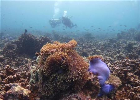 Divers swim above a bed of mostly dead corals off Malaysia's Tioman island in the South China Sea in this May 4, 2008 file photo. REUTERS/David Loh