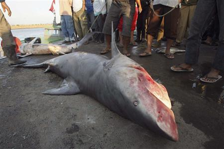 All meat and no fins at bali shark restaurant reuters for Is fish considered meat