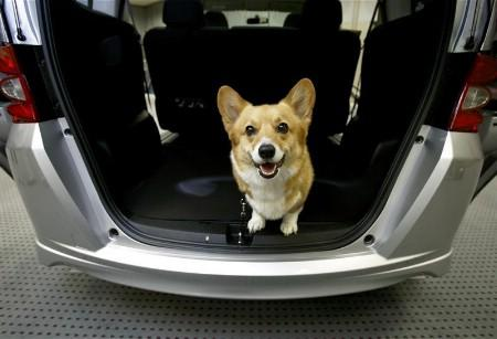 A dog poses in Honda Motor's minivan ''Freed'' at a briefing event in Tokyo May 23, 2008. Japan's No. 2 automaker is looking to win points with canine fans using a website that offers information on dog-friendly cafes and hotels, dimensions for its cars' cargo space for stashing cagfes, as rating system that ranks seat fabric for ease of removing dog hair, and much more. Picture taken May 23, 2008. REUTERS/Kiyoshi Ota (JAPAN)