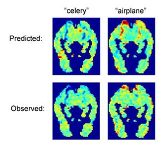 "The predicted fMRI images for ""celery"" and ""airplane"" show significant similarities with the observed images for each word. Red indicates areas of high activity, blue indicates low activity. A computer has been trained to ''read'' people's minds by looking at scans of their brains as they thought about specific words, researchers said on Thursday. REUTERS/Carnegie Mellon University/Handout"