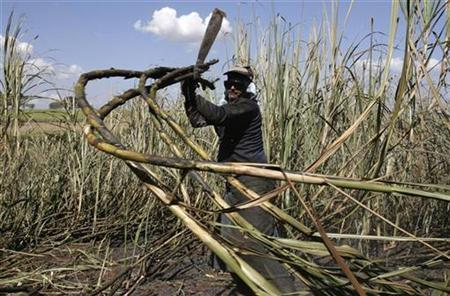 A worker cuts sugar cane for raw sugar and ethanol fuel production on the property of the Sao Martinho mill in Pradopolis, about 300 kms (186 miles) northwest of Sao Paulo July 6, 2007. REUTERS/Rickey Rogers