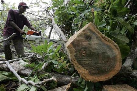 A man chops timber illegally at the forest reserve in Bojonegoro, Indonesia's East Java province December 3, 2007. REUTERS/Sigit Pamungkas