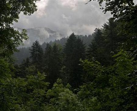 Rain clouds shroud a forest near the western Austrian city of Dornbirn, June 12, 2007. Rising temperatures have forced many plants to creep to higher elevations to survive, researchers reported on Thursday. REUTERS/Miro Kuzmanovic