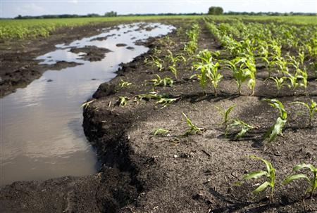 The topsoil of a corn field is washed away near Cambridge, Iowa, June 27, 2008. REUTERS/Kevin Sanders