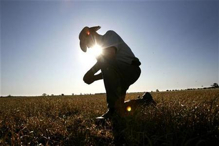 Grains farmer John Ridley looks at his failed wheat crop on his farm near the town of West Wyalong October 16, 2007. Australia could experience more severe droughts and they could become more frequent in the future because of climate change, a government-commissioned report said on Sunday. REUTERS/Mick Tsikas