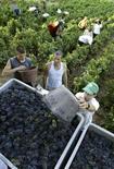 """<p>Les viticulteurs du Beaujolais organisent des séances de """"job dating"""", rencontres express destinées à mettre en contacts employeurs et candidats, pour trouver des vendangeurs, souvent recrutés parmi les RMIstes. /Photo d'archives/REUTERS/Robert Pratta</p>"""
