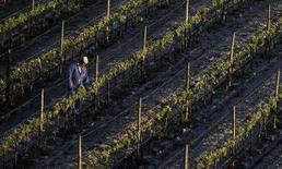 <p>Un agricoltore osserva le piante di una vigna. REUTERS/Nacho Doce</p>