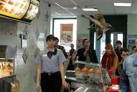 A McDonald fast food restaurant staff member looks at a cat tossed across the counter by a performance artist in Moscow May 1, 2007. C REUTERS/Thomas Peter