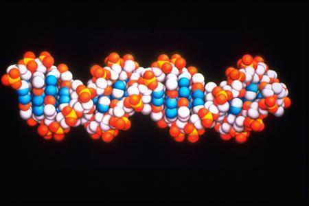 A DNA molecule is seen in a handout photo from AstraZeneca. REUTERS/Newscast