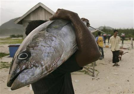 A fisherman carries a tuna fish from his catch at a harbour in Lampuuk on the outskirts of Banda Aceh July 31, 2008. Tuna catches across the Indian Ocean have fallen sharply in the last two years but experts are split over what is threatening the region's $6 billion industry. REUTERS/Tarmizy Harva