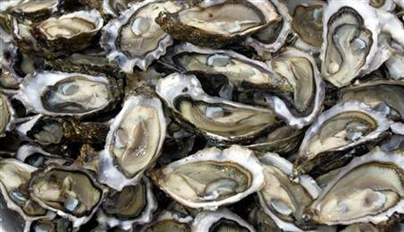 Oysters are displayed at Bassin d'Arcachon near Bordeaux, southwestern France, during a protest against an oyster ban May 18, 2006. A herpes virus is killing young oysters in France because they have spent too much energy developing their sexual organs rather than their natural defenses, an oyster crisis team has found. REUTERS/Regis Duvignau