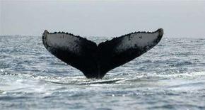 <p>La coda di una balena. REUTERS/Enrique Hernandez (ECUADOR)</p>