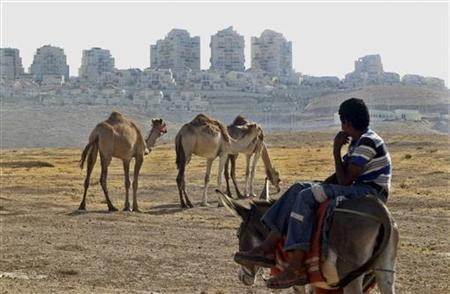 A Palestinian boy watches over camels in front in the West Bank Jewish settlement of Maale Adumim near Jerusalem August 7, 2008. REUTERS/Mahfouz Abu Turk