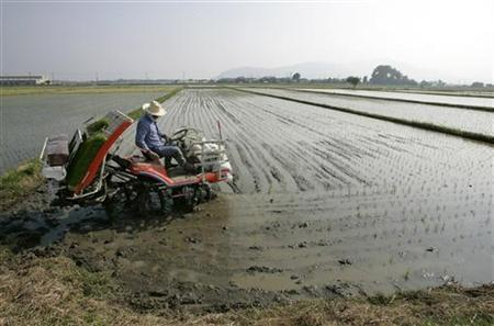 A farmer plants rice for animal feed in Takashima, central Japan May 26, 2008. REUTERS/Yuriko Nakao