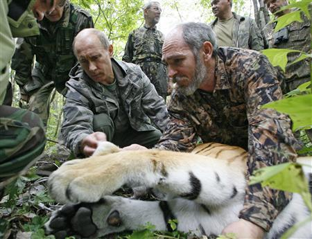 Russia's Prime Minister Vladimir Putin (L) holds a five-year-old tiger's head as scientists put on a collar with a satellite tracker on the animal in the academy of sciences Ussuri reserve in Russia's Far East, August 31, 2008. REUTERS/RIA Novosti/Kremlin/Alexei Druzhinin