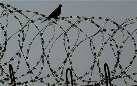 A bird sits on a barbered wire fence at Abu Ghraib prison, west of Baghdad, Iraq June 23, 2006. REUTERS/Wathiq Khuzaie/Pool