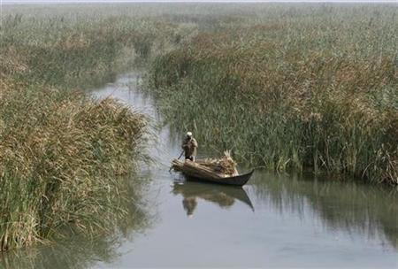 A marsh Arab man paddles a boat loaded with reeds he gathered at the Chebayesh marsh in Nassiriya, 300 km (185 miles) southeast of Baghdad July 27, 2008. REUTERS/Saad Shalash