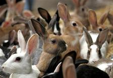 <p>Rabbits look at passers-by as they are put on a sale at a market in Alexandria, some 137 miles north of Cairo, April 17, 2006. REUTERS/Goran Tomasevic</p>