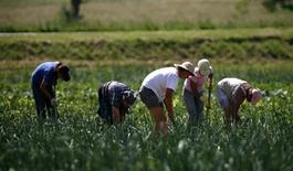 <p>Workers at an organic farm at Dezevci, eastern Croatia, May 27, 2008. REUTERS/Nikola Solic</p>