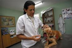 <p>Dr. Tika Bar-On, the chief veterinarian of the city of Petah Tikva, takes a spit sample from a dog at the veterinary clinic in Petah Tikva near Tel Aviv September 10, 2008. REUTERS/Gil Cohen Magen</p>