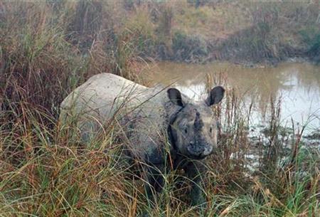 A Rhinoceros is seen in the Royal Chitwan National Park about 200 km (125 miles) south of Kathmandu January 2, 2007. REUTERS/Kiran Man Chitrakar