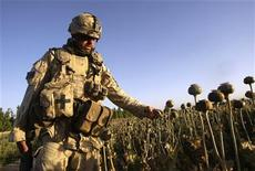 <p>A soldier from 3rd Battalion PPCLA (Princess Patricia's Canadian Light Infantry) out of Edmonton, Canada part of the Observer Mentoring and Liason Team (OMLT), walks through a poppy field in the Zharey district, southern Afghanistan May 21, 2008. REUTERS/Peter Andrews</p>