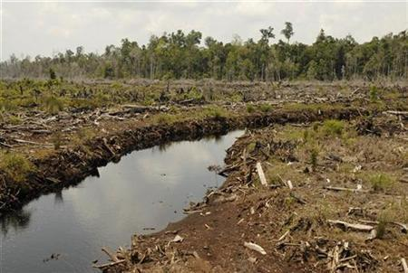 A view of a destroyed rainforest in Kotawaringin Timur district in Indonesia's central Kalimantan province October 9, 2007. REUTERS/Hardi Baktiantoro