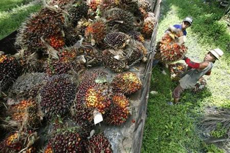 Workers collect oil palm fruits at a plantation in Sepang outside Kuala Lumpur December 2, 2008. REUTERS/Bazuki Muhammad