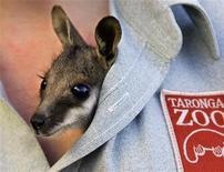 <p>Детеныш кенгуру Петра выглядывает из-под рубашки смотрительницы зоопарка Таронга в Сиднее 1 сентября 2005 года. Обитатели знаменитого зоопарка Таронга в Австралии в этом году начали праздновать Рождество заранее, а некоторые угулялись так, что им потребовалась помощь смотрителей. REUTERS/Will Burgess</p>