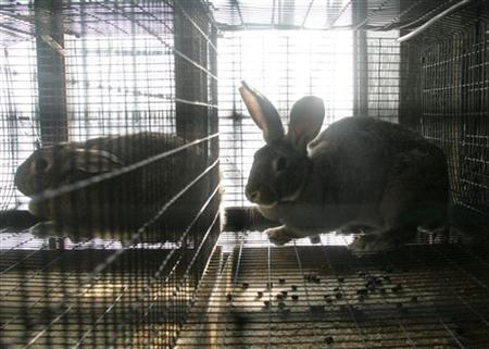 A cloned rabbit outside Moscow in a 2005 photo. Researchers who tried to use mouse, cow and rabbit eggs to make human clones said on Monday the effort failed to produce workable embryos but added that they showed human cloning should work in principle. REUTERS/Viktor Korotayev