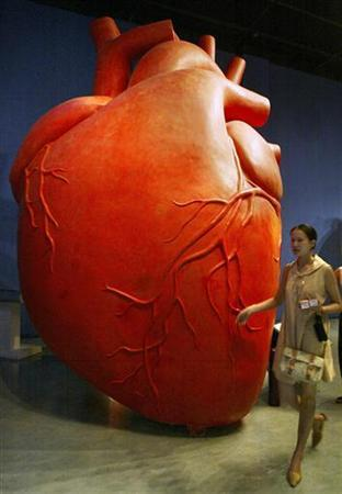 A Chinese visitor walks past a huge model of a heart displayed at the Shanghai Science and Technology Museum August 27, 2003. REUTERS/Claro Cortes IV