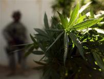 <p>La brigade des stupéfiants du Nigeria a saisi mardi 6,5 tonnes de cannabis au domicile d'un homme affirmant être âgé de 114 ans. Le vaillant centenaire a déclaré aux enquêteurs qu'il croyait que ces sacs renfermaient du riz. /Photo d'archives/REUTERS/Goran Tomasevic</p>