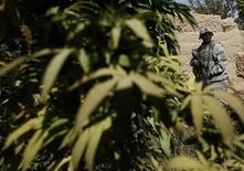 <p>Foto de archivo del soldado estadounidense Aundray Gibbons frente a un campo de marihuana en Afganistán 10 oct 2007. La oficina antinarcóticos de Nigeria confiscó el martes 6,5 toneladas de marihuana de la casa de un hombre que declaró tener 114 años. REUTERS/Goran Tomasevic</p>
