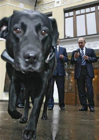4月1日、ロシアのプーチン首相が飼っている愛犬「コーニ」が与党会合のお菓子を盗み食いしたことが明らかに。昨年10月代表撮影(2009年 ロイター)