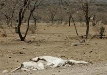 <p>Immagine d'archivio. To match feature KENYA-DROUGHT/ REUTERS/Antony Njuguna (KENYA ENVIRONMENT ANIMALS)</p>