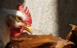 <p>Цыпленок в магазине в Каире 11 апреля 2007 года. Шестилетний мальчик умер от птичьего гриппа в Египте, став 24-й жертвой этой болезни в стране, сообщило государственное информационное агентство MENA во вторник. REUTERS/Tara Todras-Whitehill</p>