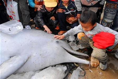 Children look at a dead Chinese white dolphin in Lianjiang county, in east China's Fujian province, in this file photo from November 24, 2007. Experts said it probably got entangled in fishing nets and suffocated to death. The Chinese white dolphin is a unique specie listed in the most-protected animal list. Picture taken November 24, 2007. REUTERS/China Daily