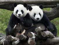 <p>Thailandia, panda sorprende zoo dando alla luce un piccolo. REUTERS/Pichi Chuang</p>