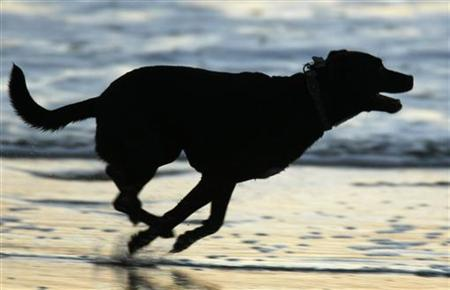 A dog runs along the beach after sunset in Cardiff, California December 5, 2007. REUTERS/Mike Blake
